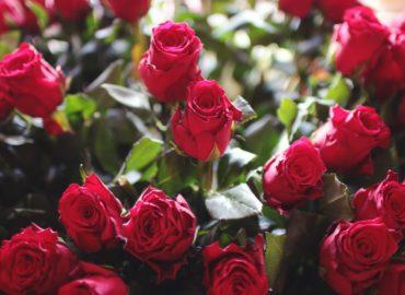 Apa de Trandafiri Carla Popa